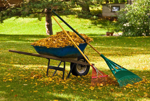 Spring Fall Clean Up Boise Id Lush Lawn Care Pros