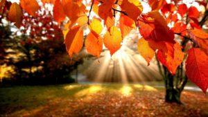 Fall Lawn Aeration in Boise, Meridian, Kuna, Eagle, Star