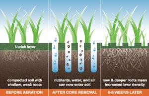 Lawn Aeration Education